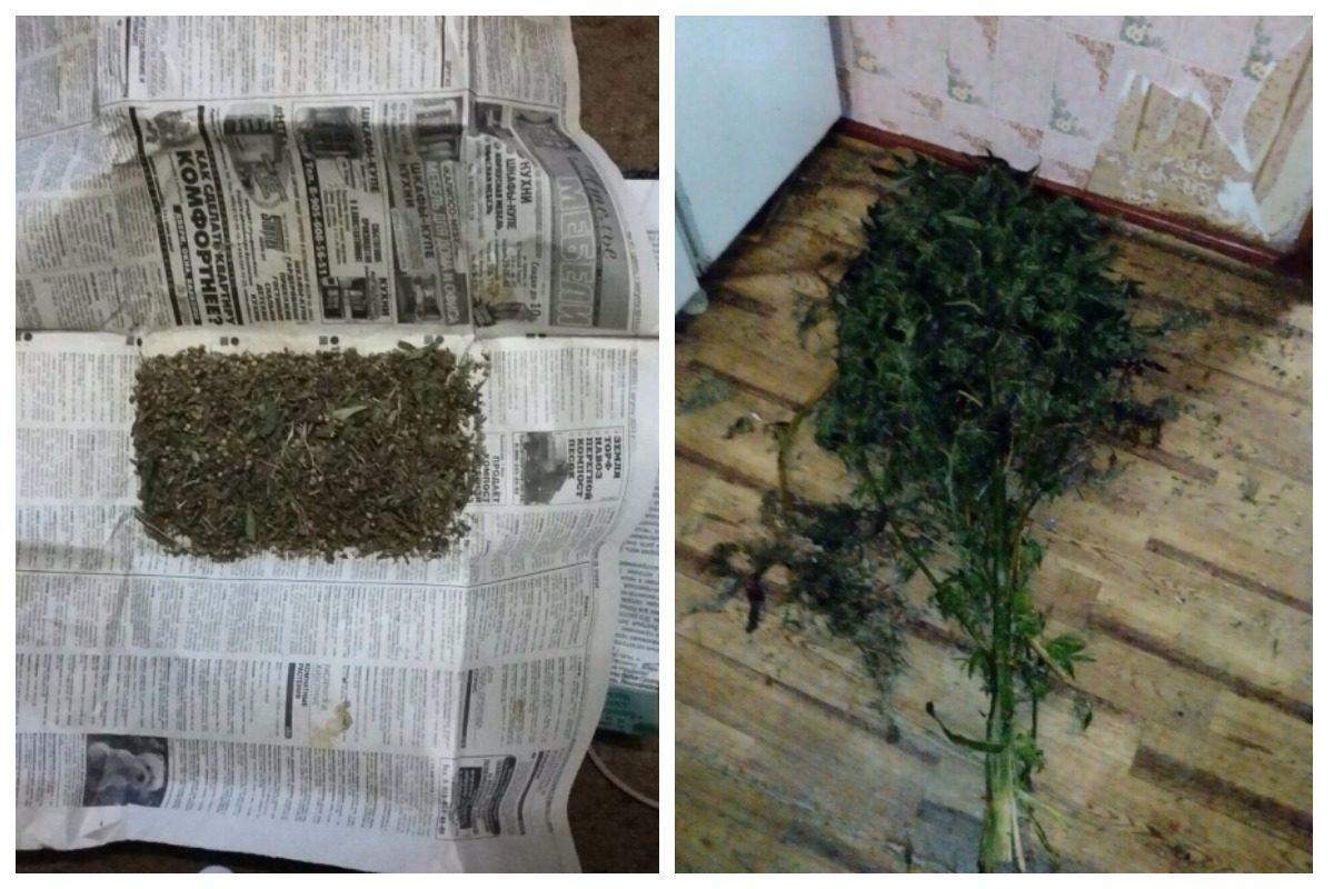 Последние новости конопли в россии вьетнам купить марихуаны