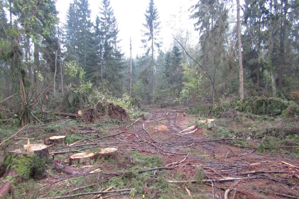 В Тверской области семь организаций попались на нарушении требований пожарной безопасности в лесах
