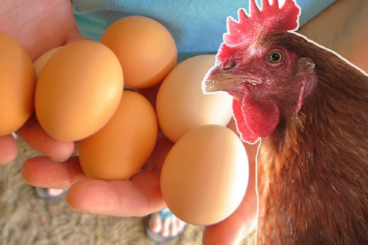 Верховный суд подтвердил запрет разведения кур и других животных на дачах