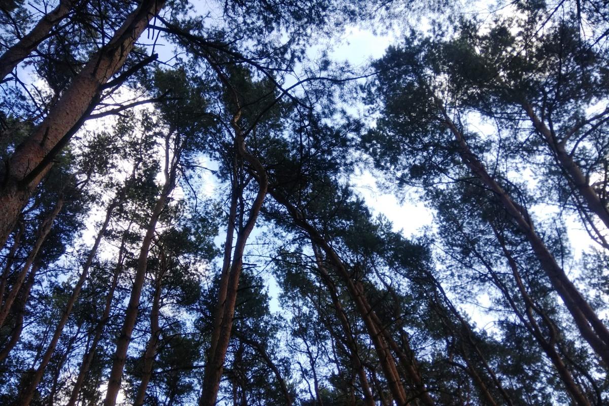 В Верхневолжье утверждены границы еще десяти особо охраняемых природных территорий регионального значения