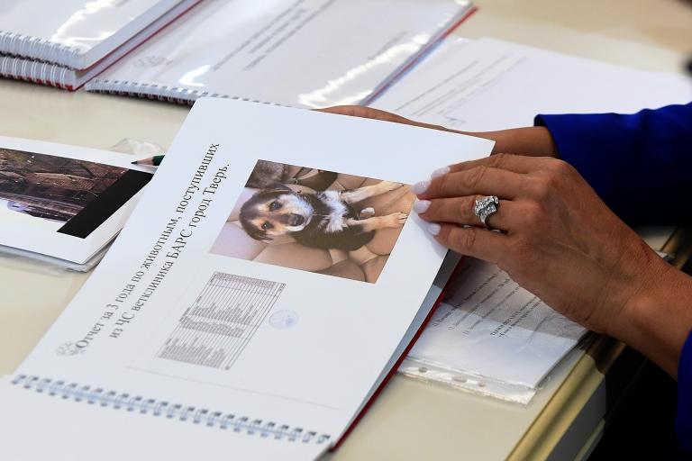 В Тверской области внедрят современную систему обращения с безнадзорными животными